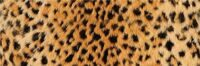 preview__decor__okavango__20x60.jpg